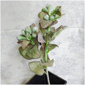 Planta exotica artificiala Kiera 66cm